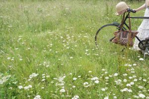 cycle in the meadow